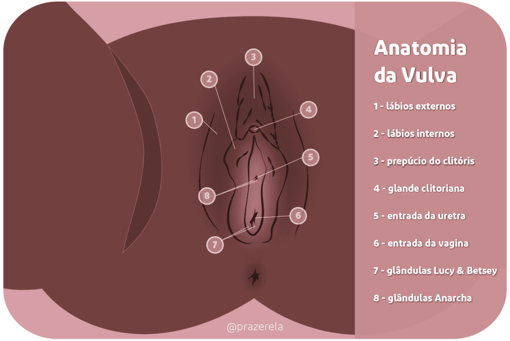 anatomia da vulva e localização do clitóris