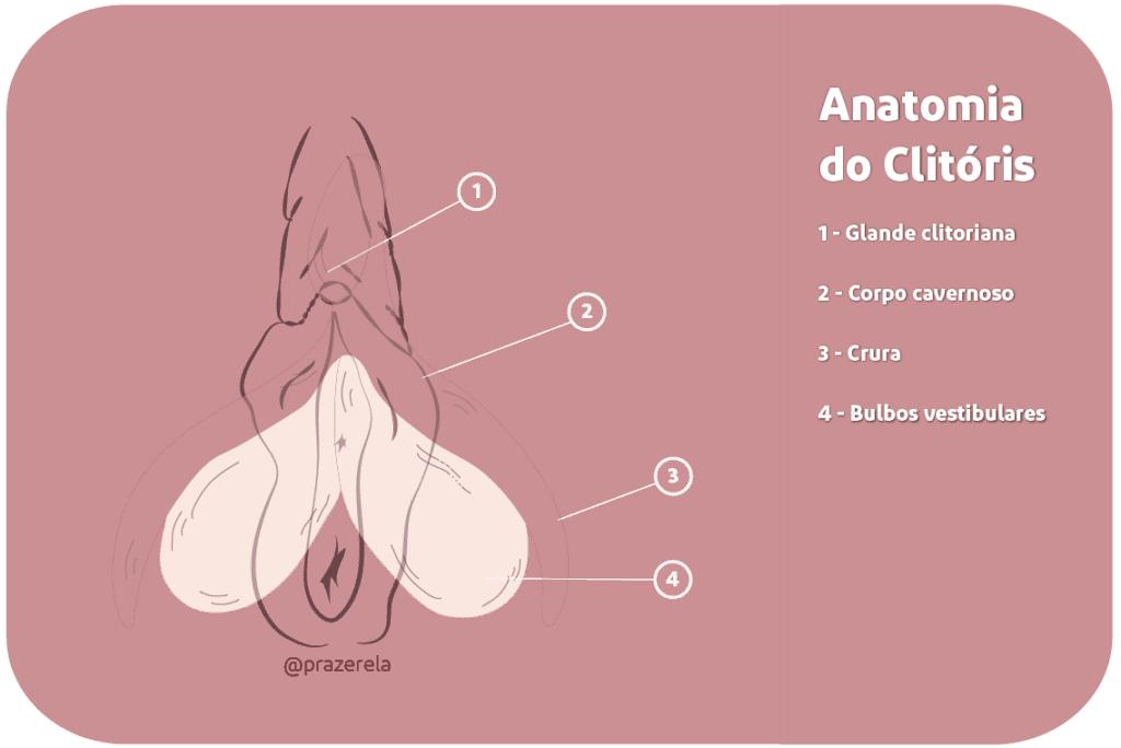 anatomia do clitóris corpo feminino