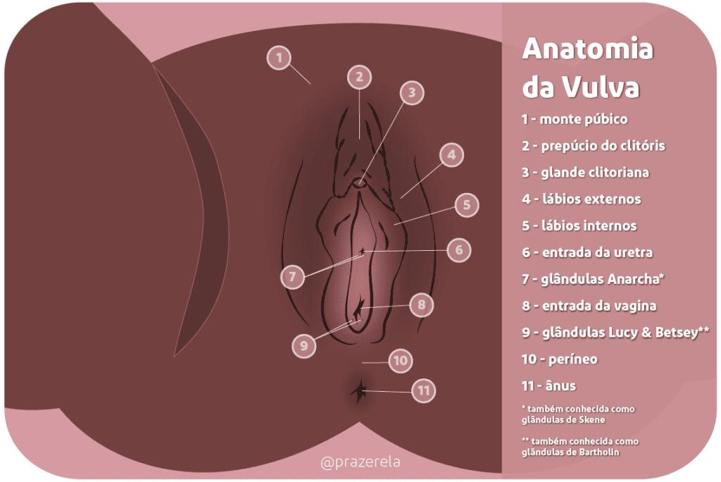 o que é vulva e vagina